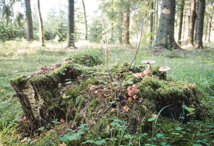 höstmorgon (7 of 8)