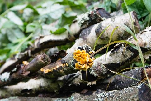 tete minttu svampar (5 of 6)