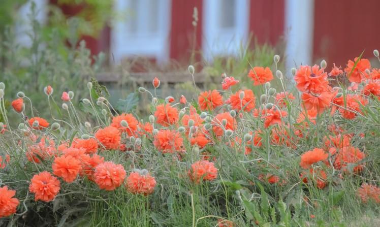 blomma-4 (2)
